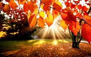 осінь Закарпаття