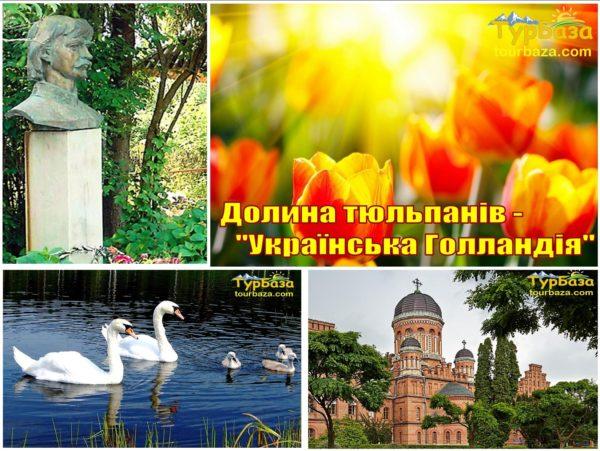 Долина-тюльпанів-Українська-Голландія